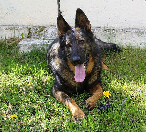Профессия – пограничный пес